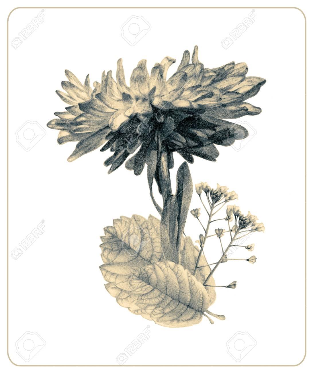 Zusammensetzung Von Verschiedenen Frühlingsblumen Und Anlagen