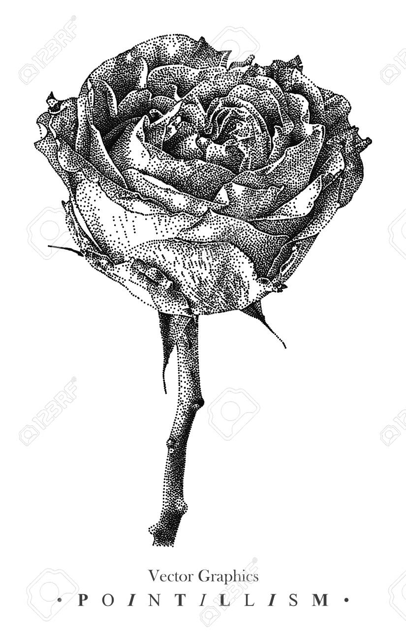 Vector Illustration With Rose Flower Drawn By Hand Graphic Drawing
