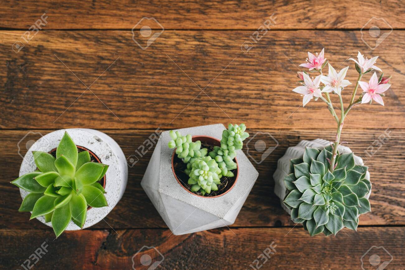 Succulent Plants In Concrete Plant Pots On Wooden Table Top Stock Photo Picture And Royalty Free Image Image 150296435
