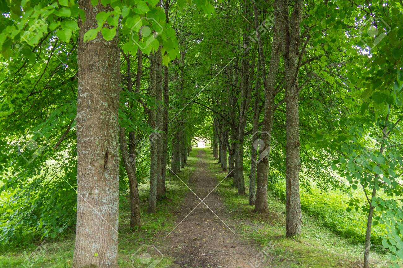 Alley of the old Russian estate in the Pskov region. - 118778376