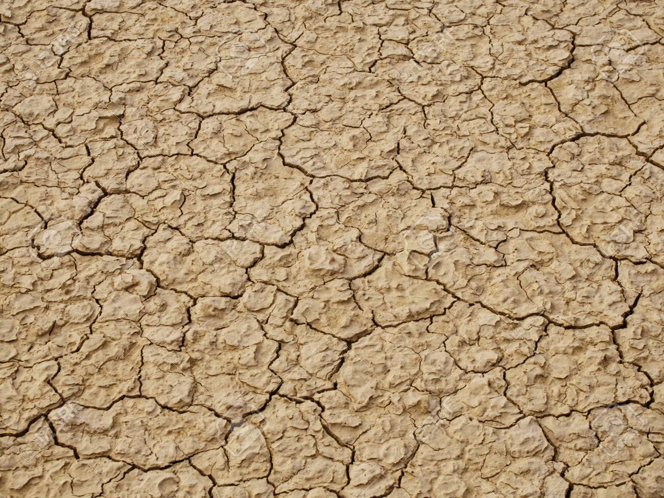 Cracked thin layer of earth in the hot steppes of Kazakhstan. - 137025866