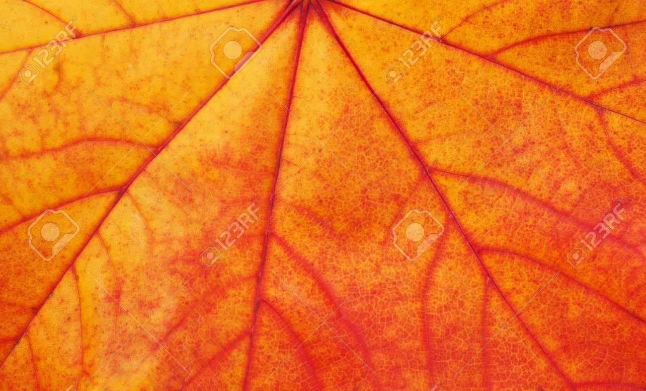 leaf texture - 33038757