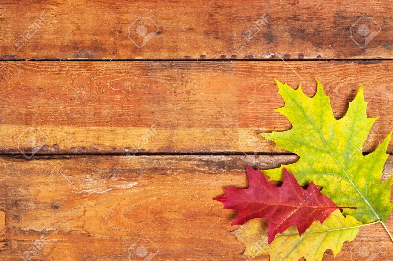 Autumn maple leaves on wood planks - 48266800