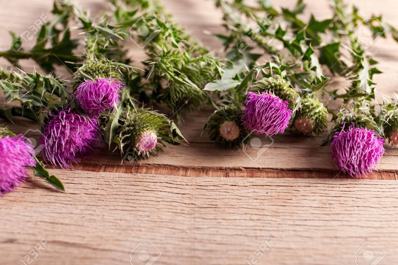 Plante épineuse violette sur le bureau en bois. fond de nature