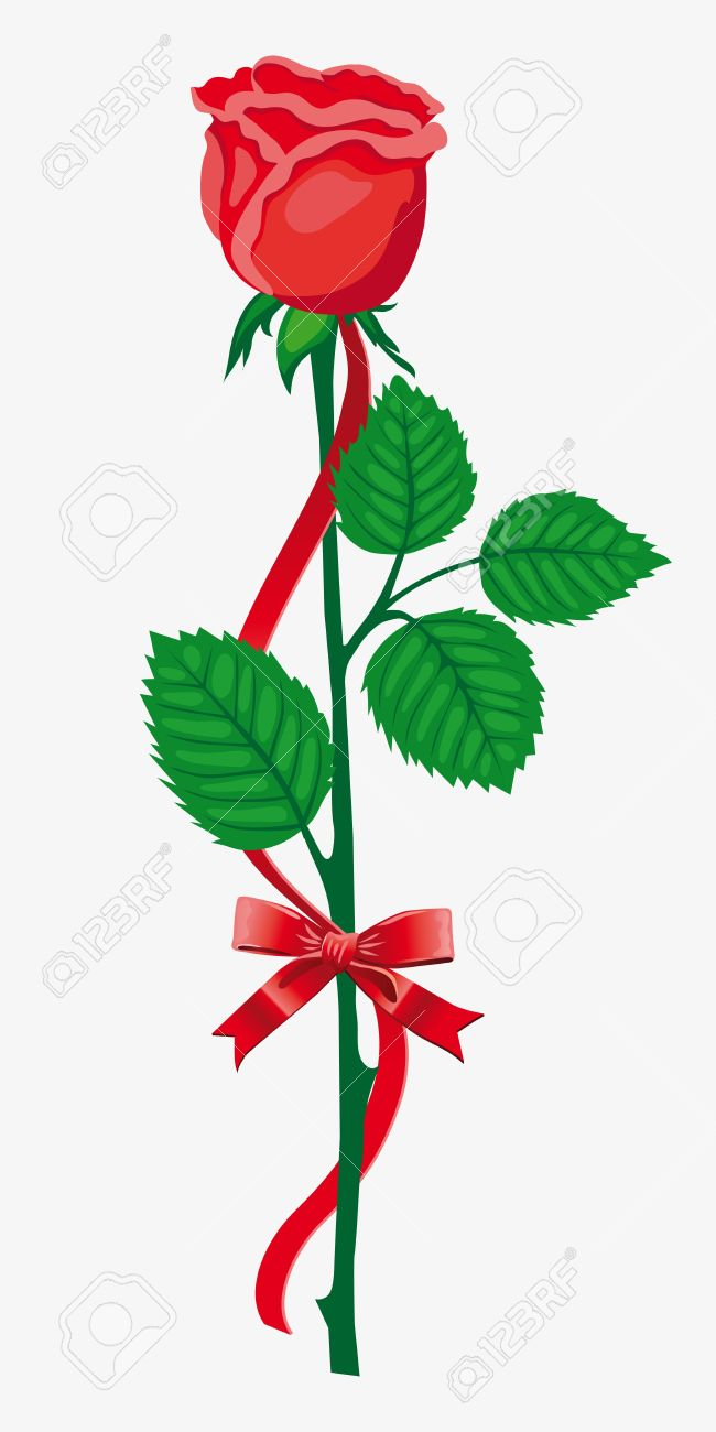 Single Red Rose With Bow Royalty Free Cliparts, Vectors, And Stock ...
