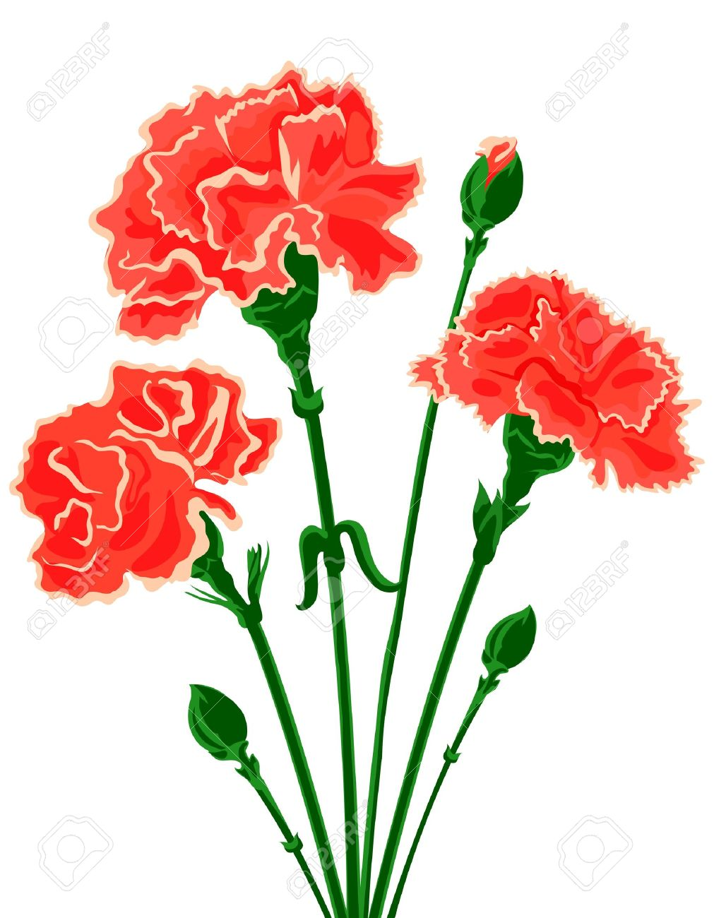 Vector bouquet of Carnations Stock Vector - 13312453