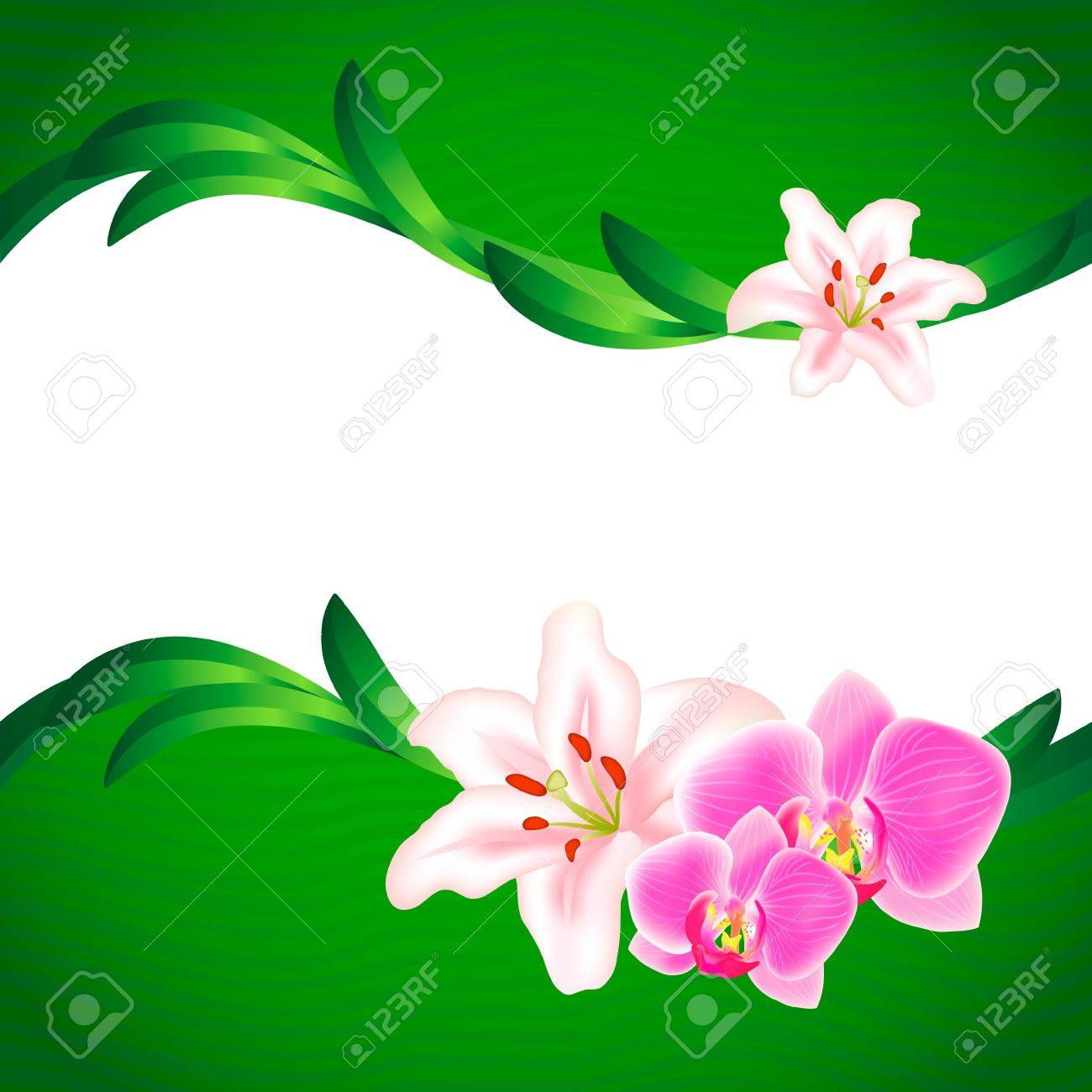 Beautiful Lily and Orchid background Stock Vector - 13662693