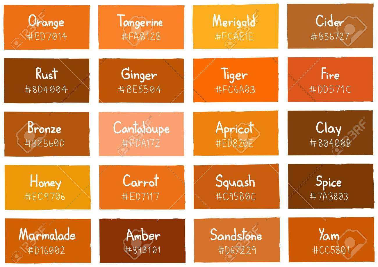 Orange Tone Color Shade Background With Code And Name Illustration Stock Vector