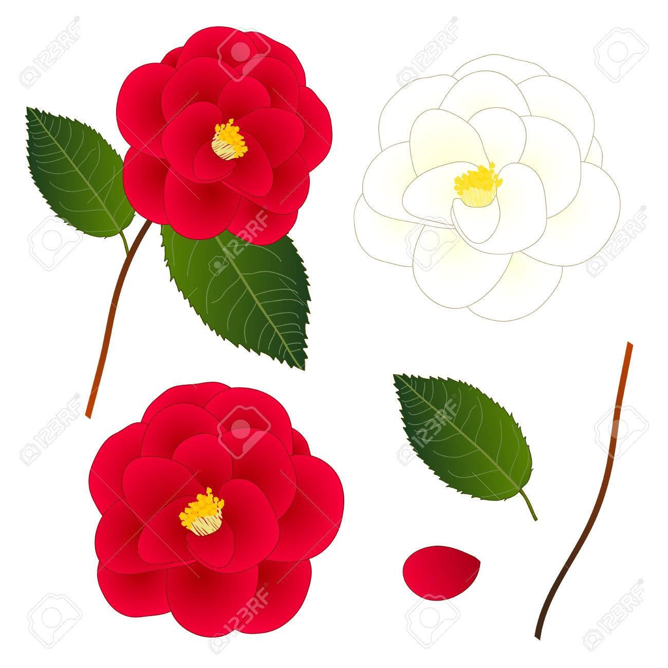 白と赤の椿の花白背景に分離されましたベクトルの図のイラスト素材
