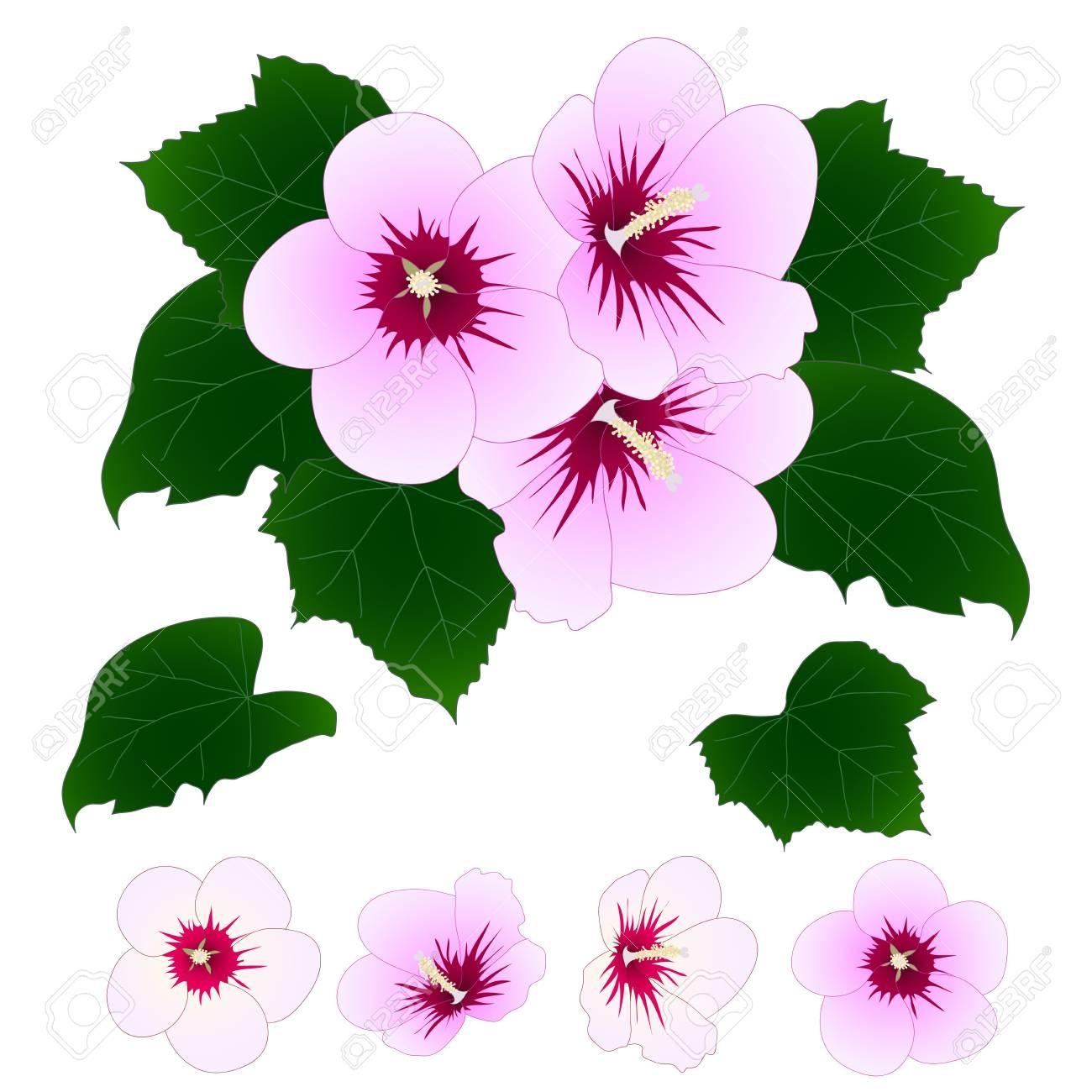 Rose Of Sharon Vector Illustration Royalty Free Cliparts Vectors