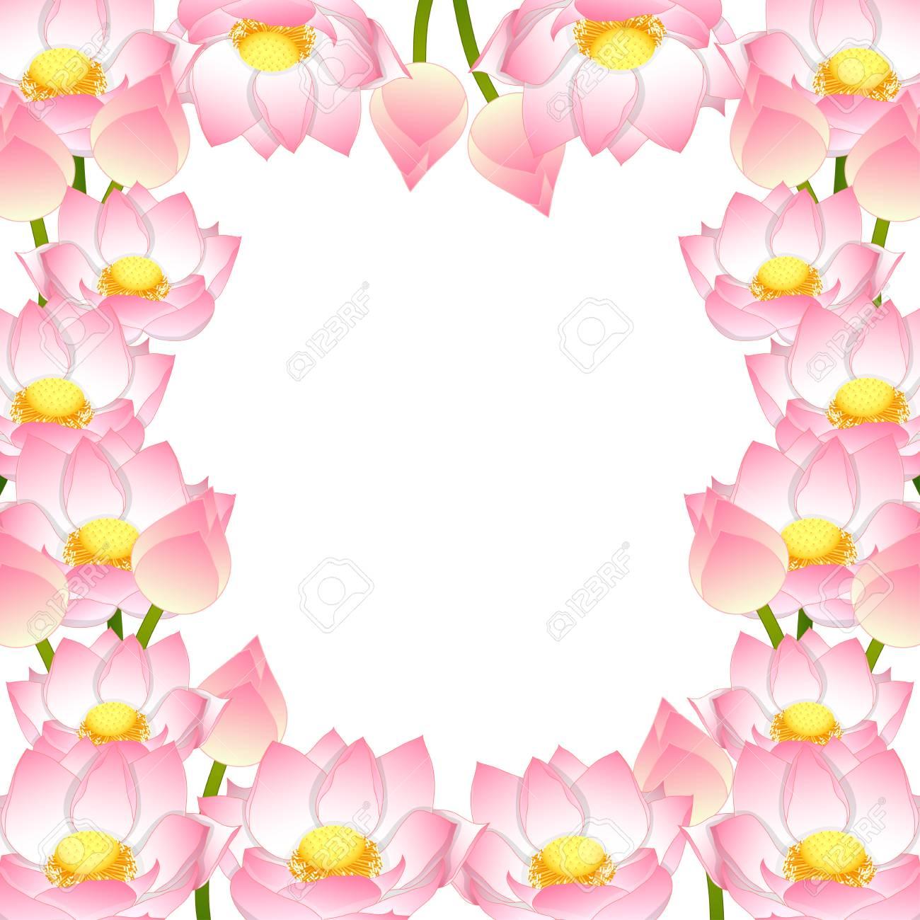 Nelumbo Nucifera Indian Lotus Border Sacred Lotus Bean Of