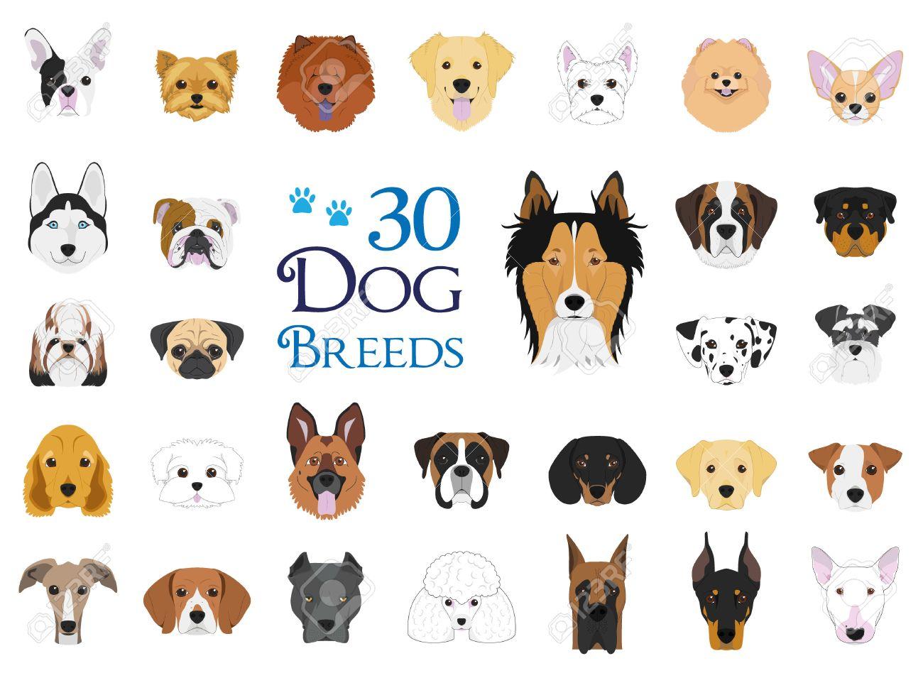 Razas De Perros Vector Colección Conjunto De 30 Razas De Perros