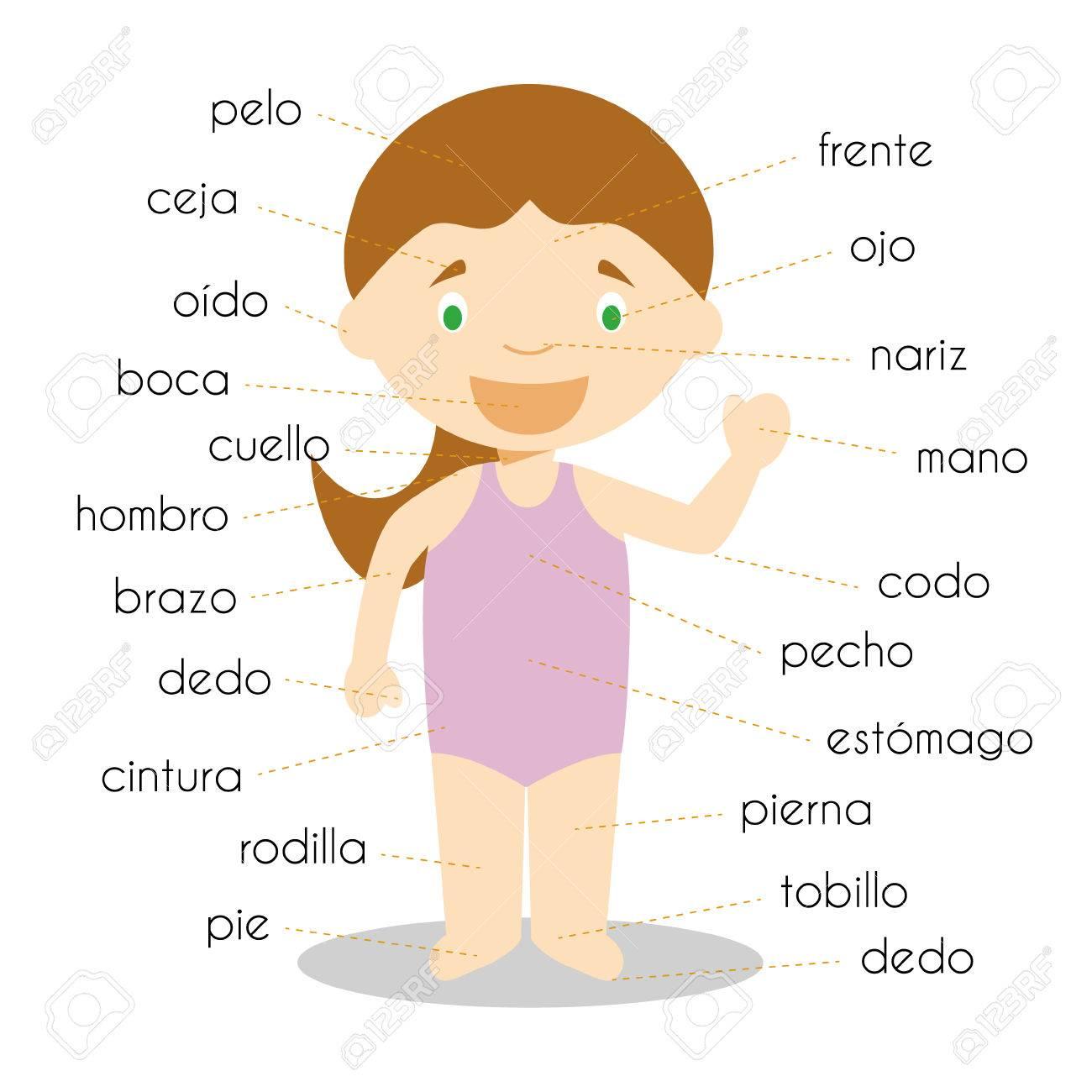 Menschliche Körperteile Wortschatz In Spanisch Vector Illustration ...