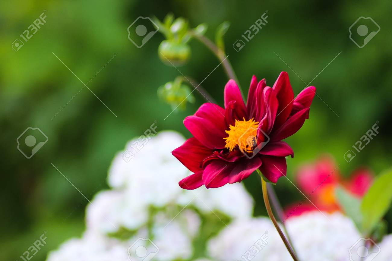 Red Bright And Deep Colored Flowers In A Beautiful Garden Stock ...