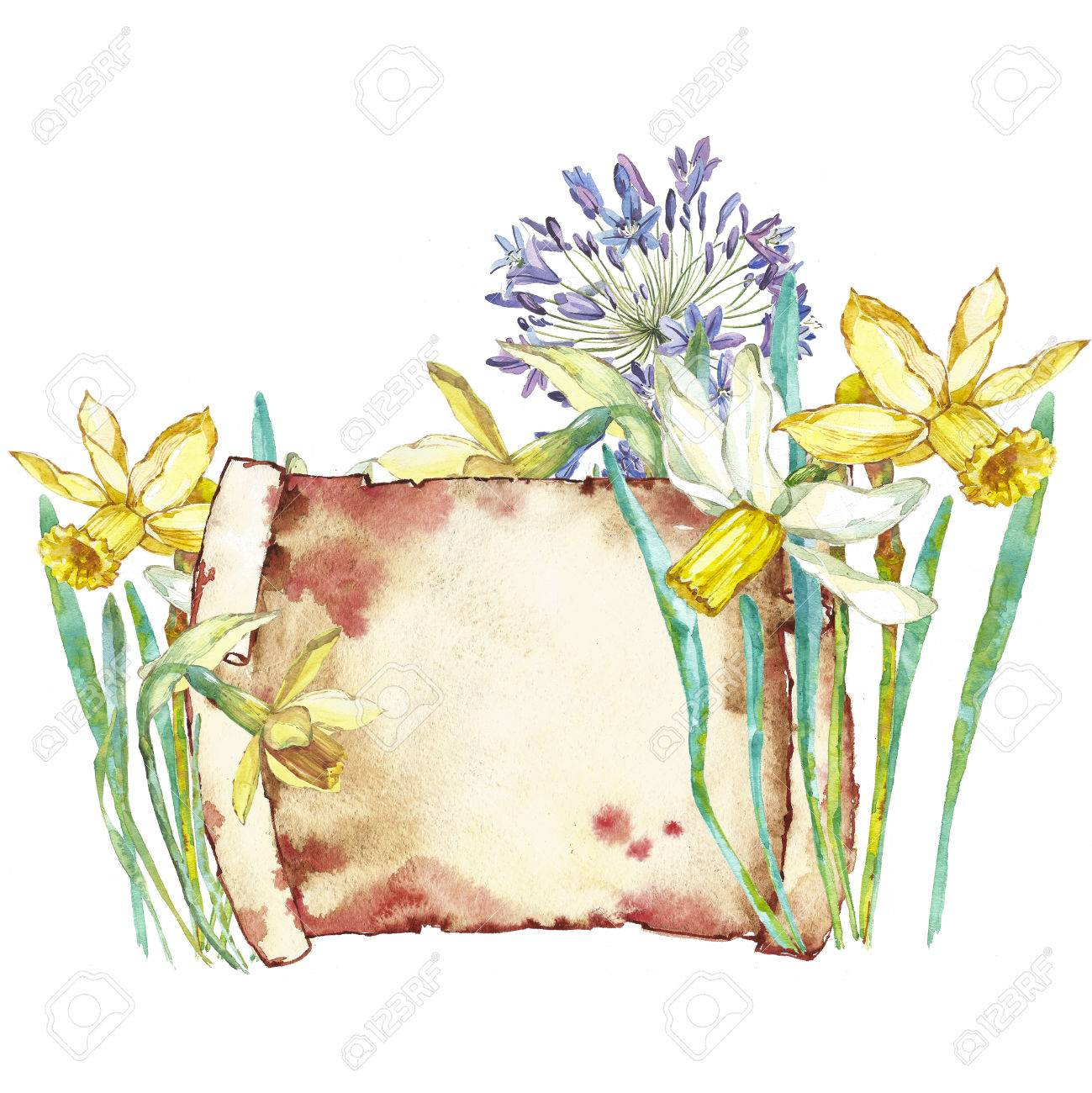 Spring Flowers Narcissus Isolated On White Background Watercolor