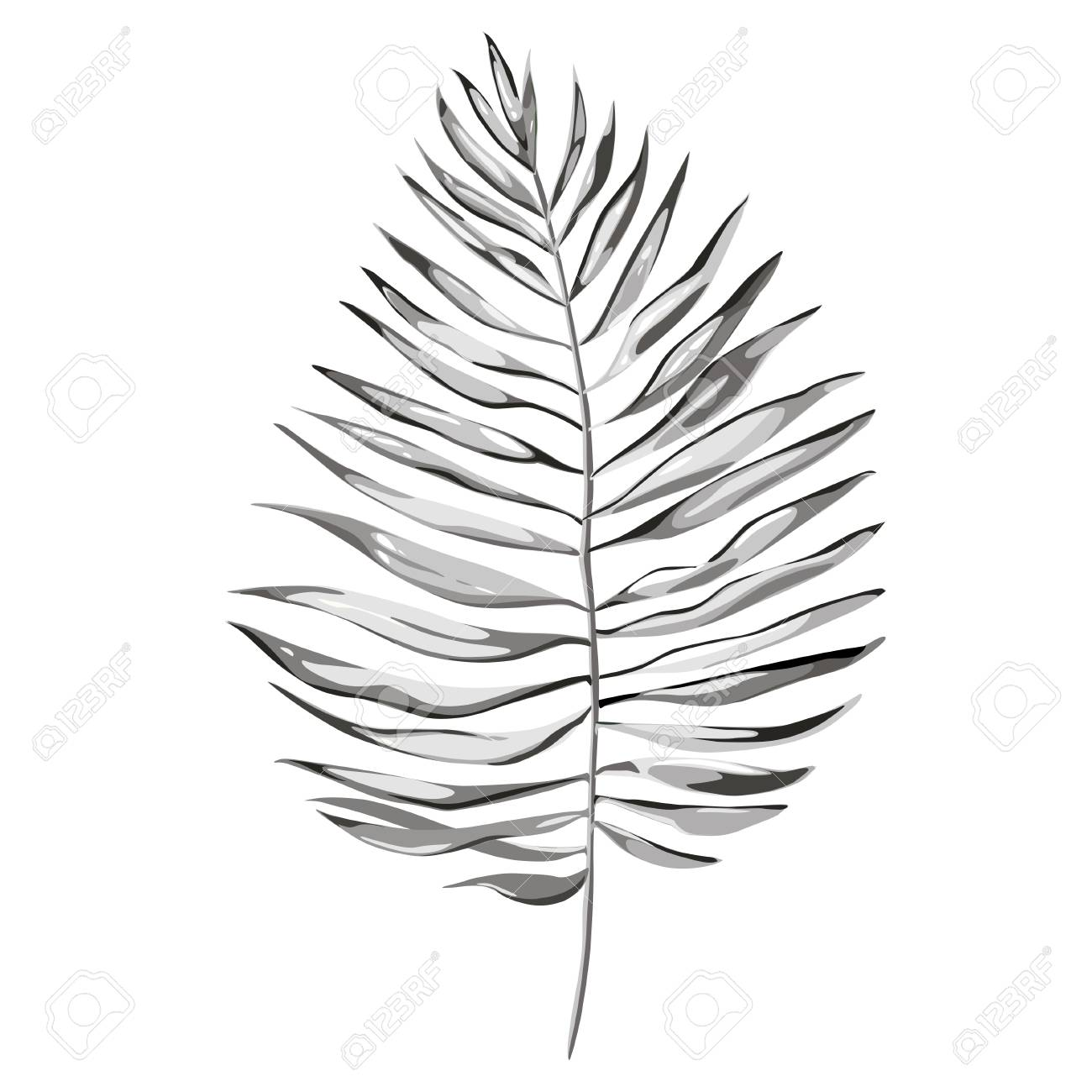 Black and white vector tropical palm leaves jungle leaves isolated on white background eps