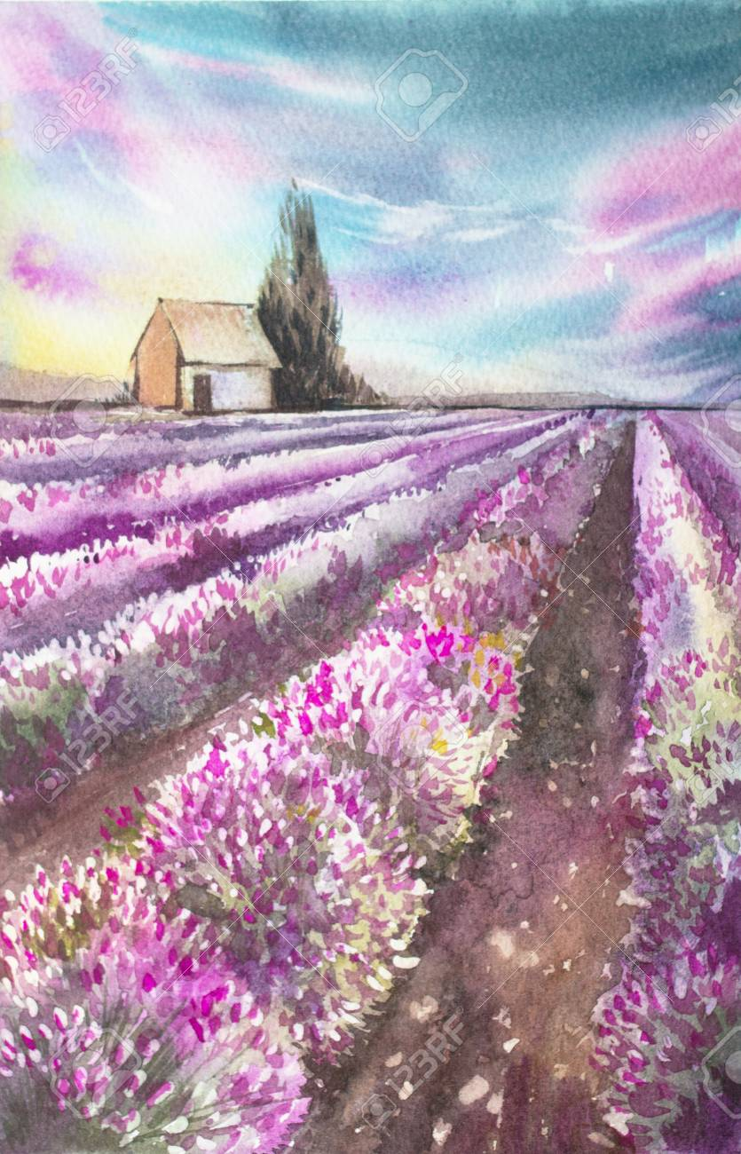 Morning Sun Over The Landscape With A Lavender Field Watercolor Stock Photo Picture And Royalty Free Image Image 92287463