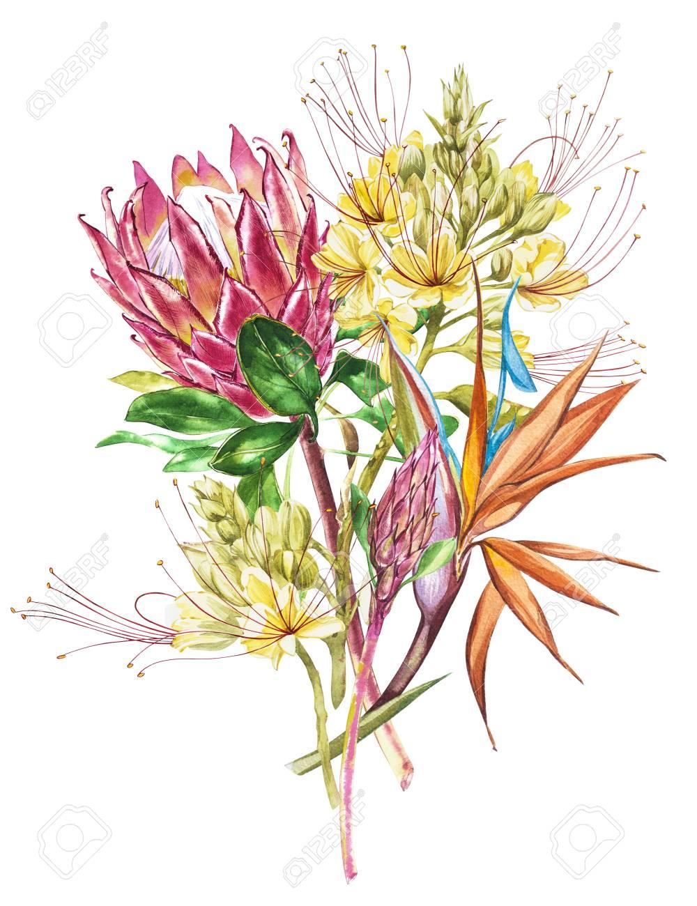 Watercolor Protea, Caesalpinia And Strelitzia Flowers Bouquet ...