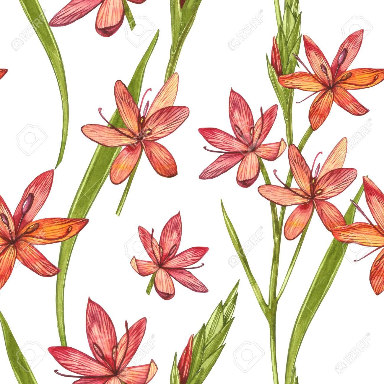 Kafir Lilies Flowers Seamless Patterns Collection Of Hand Drawn
