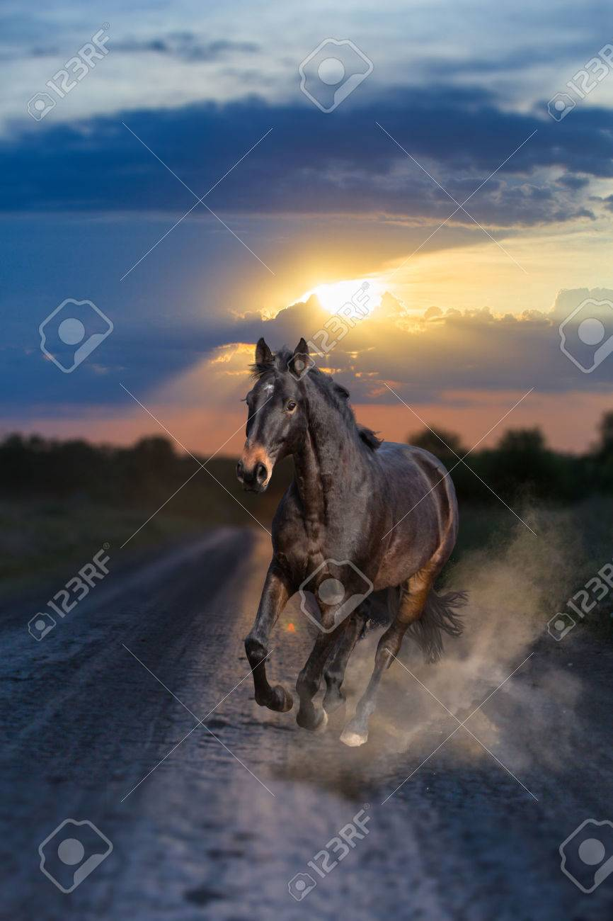 Dark Bay Horse Running On Sunset Background Front View Stock Photo Picture And Royalty Free Image Image 69461209