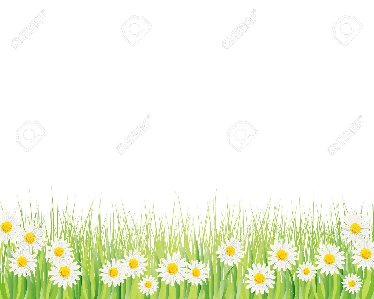 white daisy background Stock Vector - 11448907