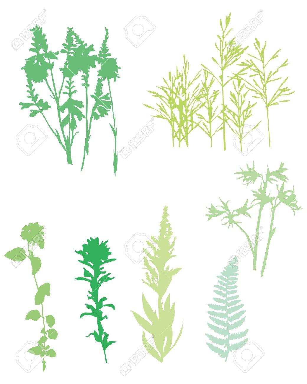 grass set Stock Vector - 11882721