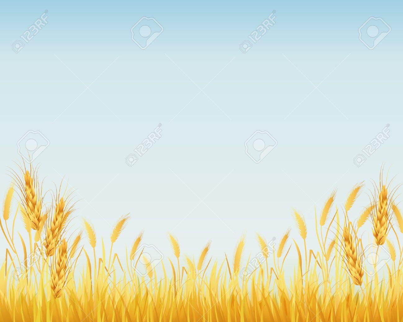Vector - crop background Harvest Background