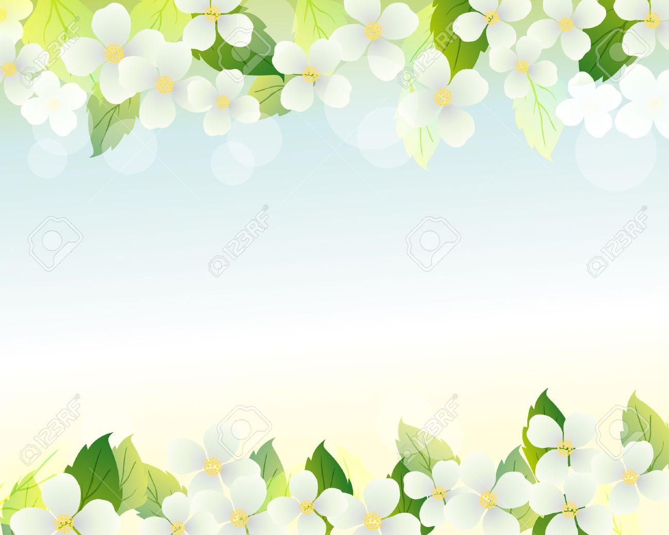 Jasmine Background Royalty Free Cliparts Vectors And Stock