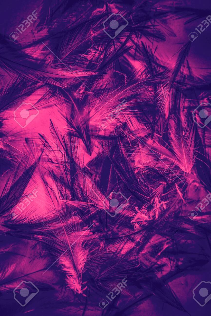 Beautiful Abstract Colorful Purple Pink Green Black And White