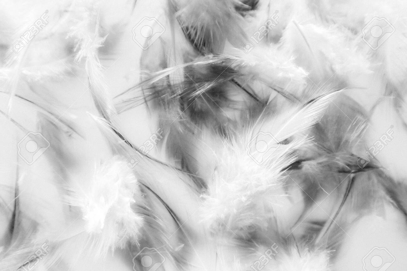 Beautiful Abstract Texture Close Up Color Black And White Feathers Stock Photo Picture And Royalty Free Image Image 128485818
