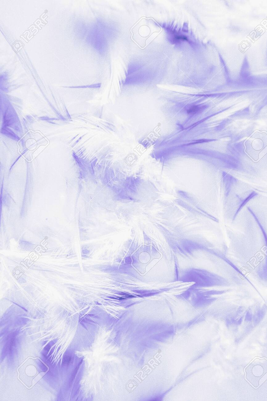 Beautiful Abstract Close Up Color White Pink And Purple Feathers Stock Photo Picture And Royalty Free Image Image 128938679
