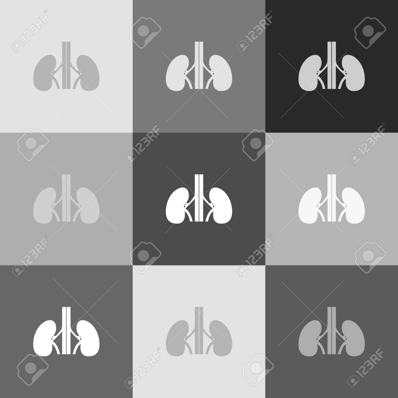 Anatomía Humana. Signo De Los Riñones. Vector. Versión En Escala De ...