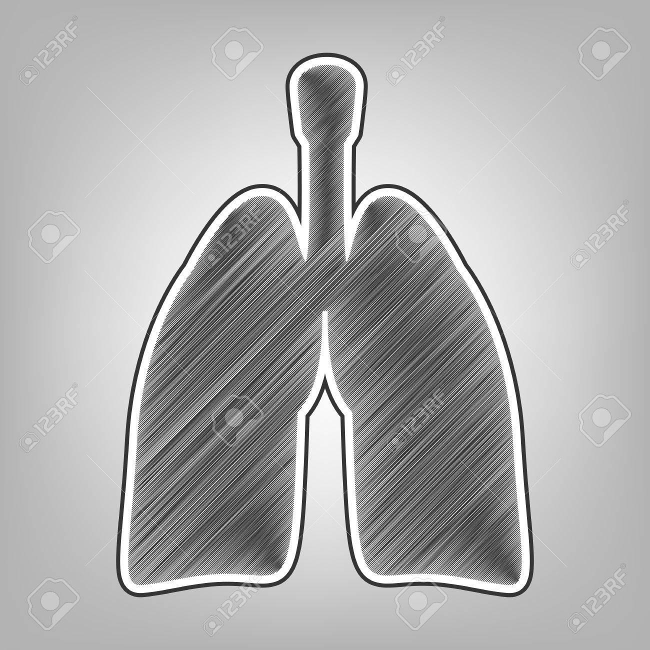 Anatomía Humana. Signo De Los Pulmones. Vector. Lápiz Esbozo ...