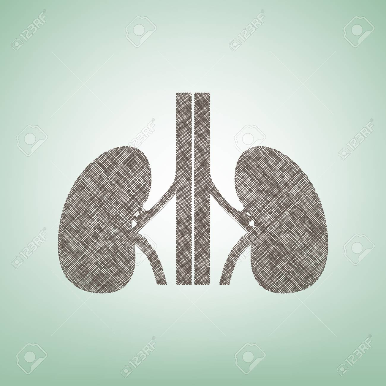 Menschliche Anatomie. Nieren-Zeichen. Vektor. Brown-Flachsikone Auf ...