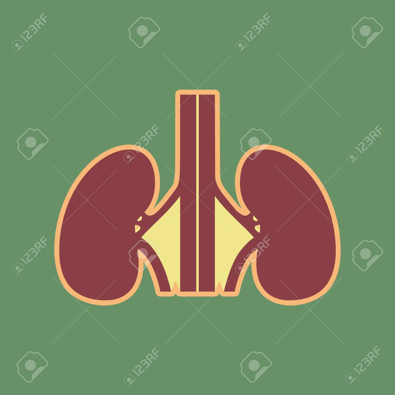 Human Anatomy Kidneys Sign Vector Cordovan Icon And Mellow Apricot Halo With Light