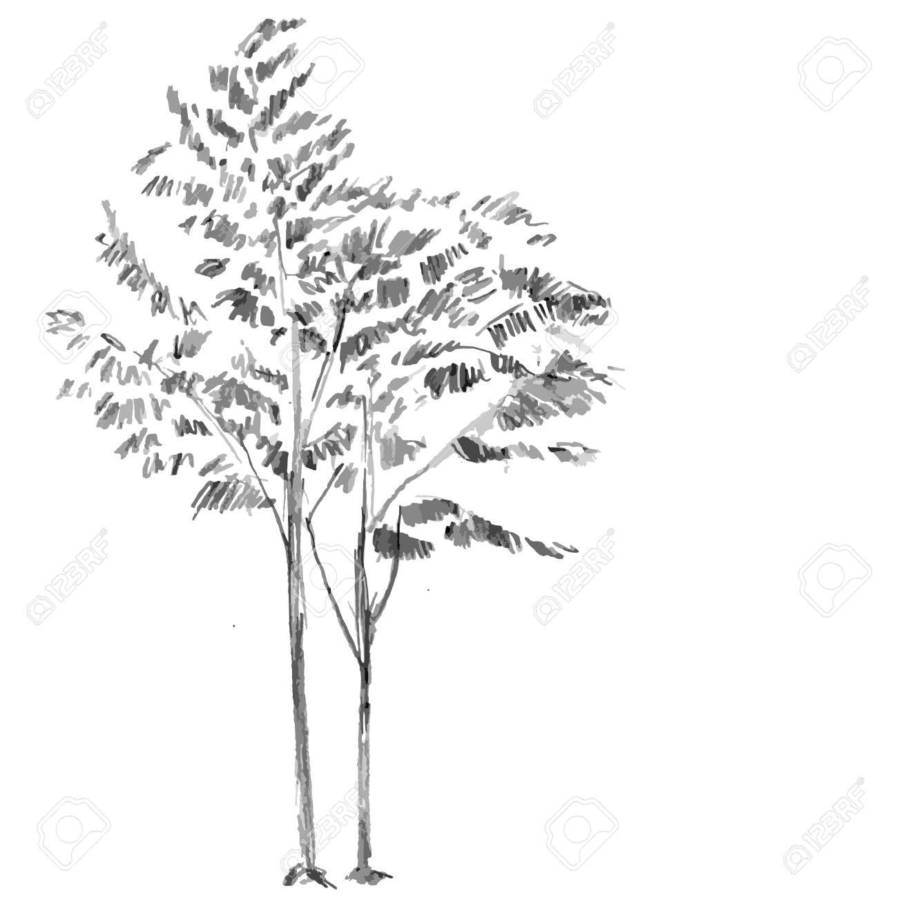 Hand Drawn Black Tree Without Leaves On White Background Branches