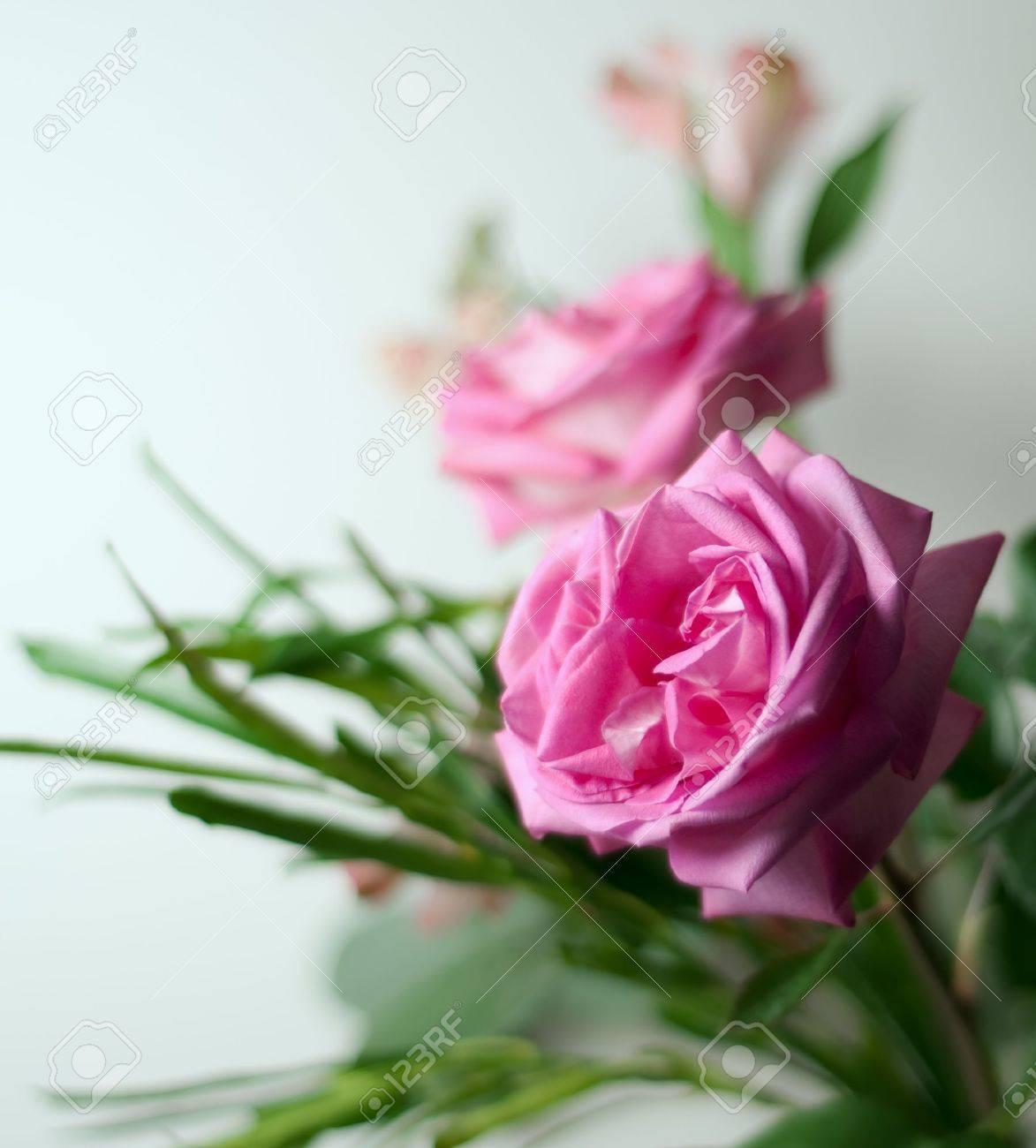 Beautiful fresh flowers for valentine stock photo picture and beautiful fresh flowers for valentine stock photo 6441922 izmirmasajfo