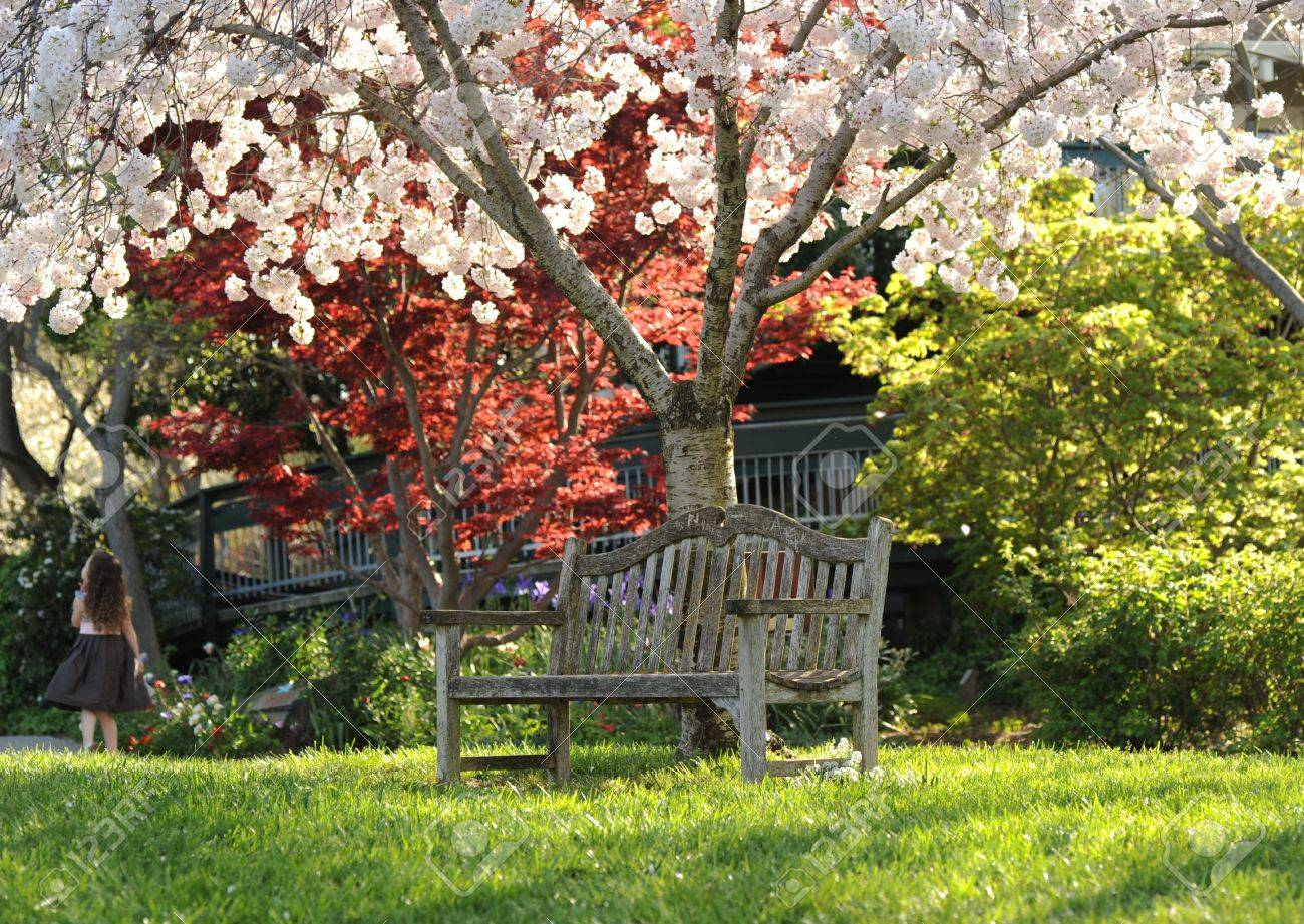 a park bench beneath a blossoming tree - 6772251