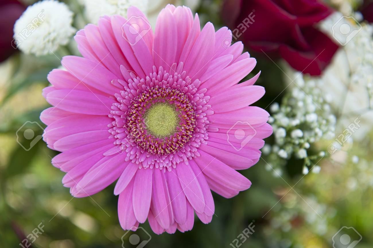 pink gerbera and rose bouquet - 9002278