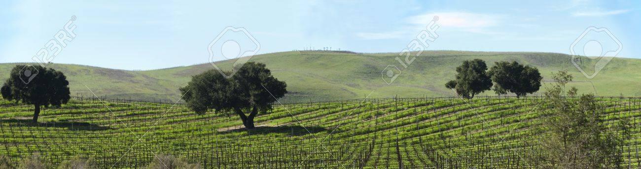 a vineyard on the santa barbara coast - 9002282