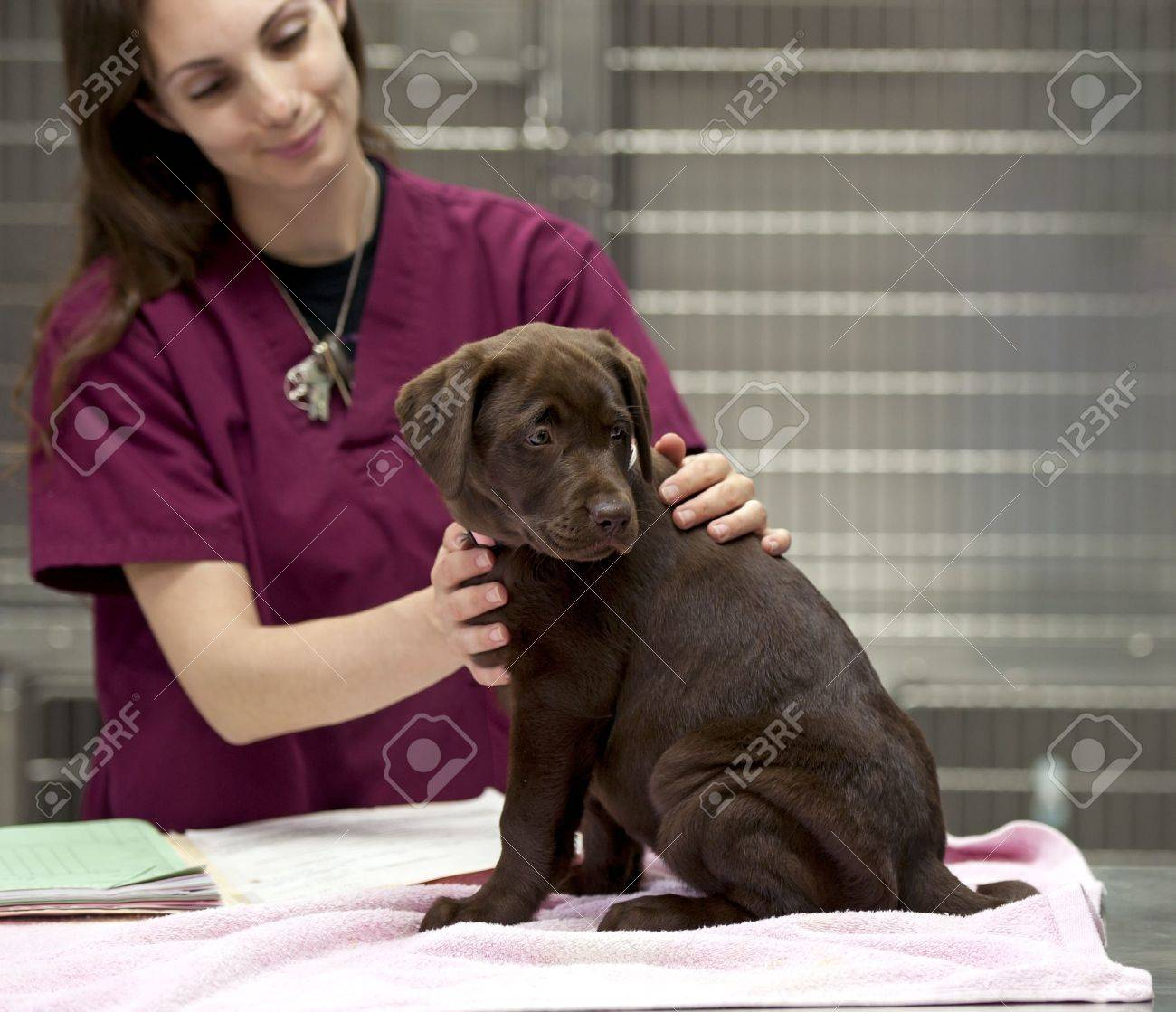 a vet technician gets a patient ready for her shots - 9733596