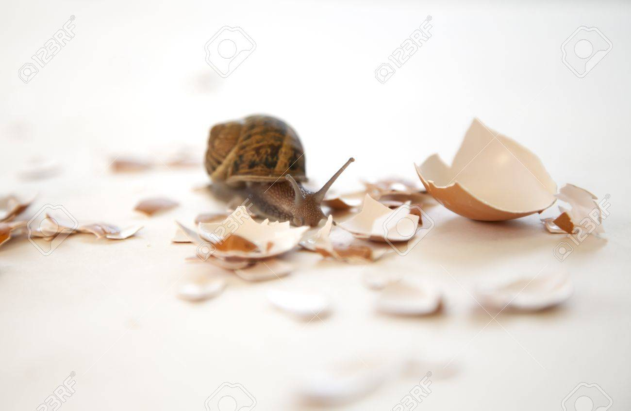 a snail navigates the rough road of life - 10453193