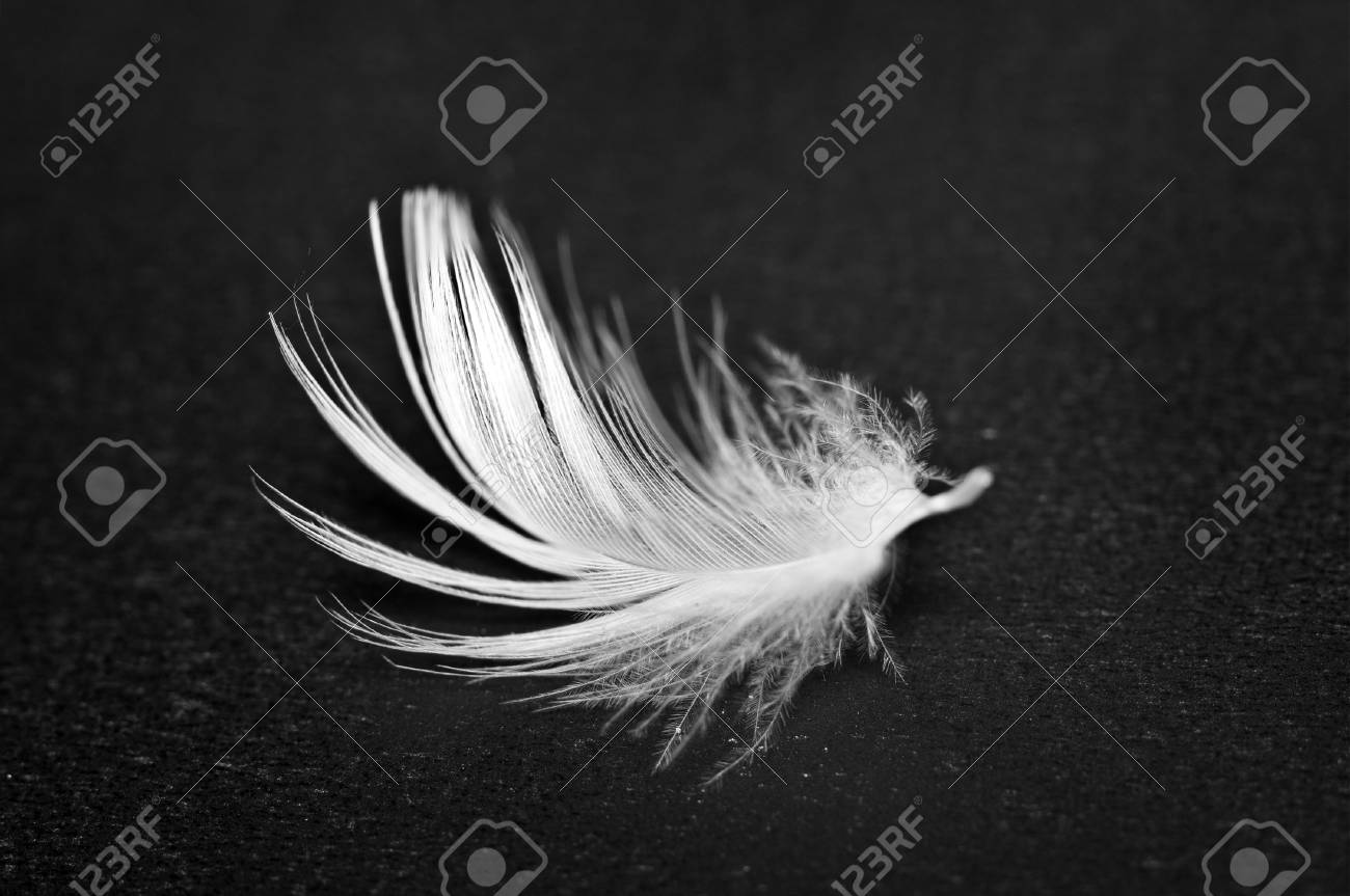 White feather on black background macro conceptual black and