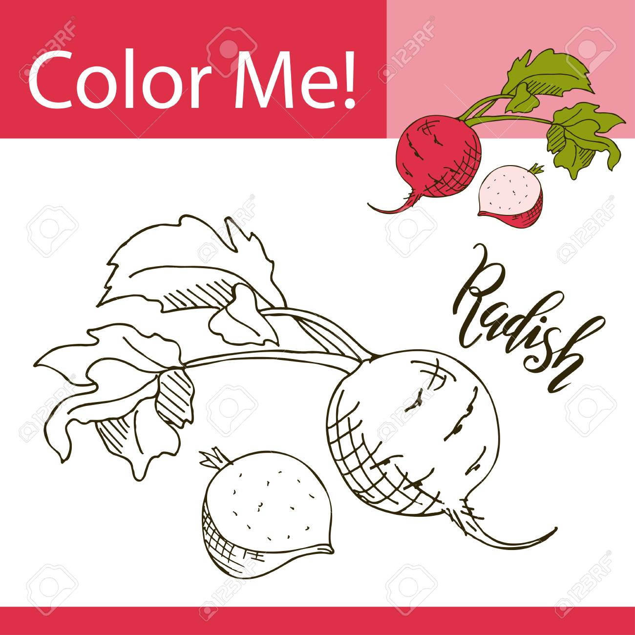 education coloring page with vegetable hand drawn vector illustration of radish stock vector
