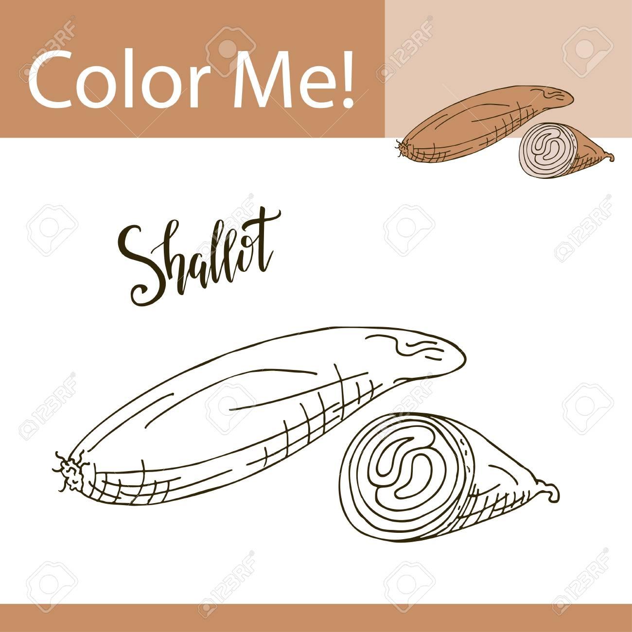 Educación Para Colorear Página Con Vegetales. Mano Dibuja La ...