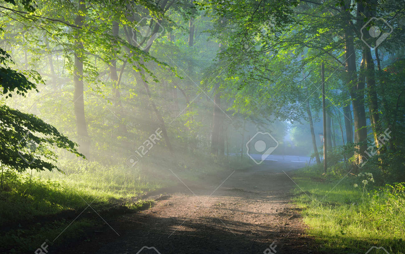 Pathway in a majestic green deciduous forest. Natural tunnel. Mighty tree silhouettes. Fog, sunbeams, soft sunlight. Atmospheric dreamlike summer landscape. Pure nature, ecology, fantasy, fairytale - 167891264