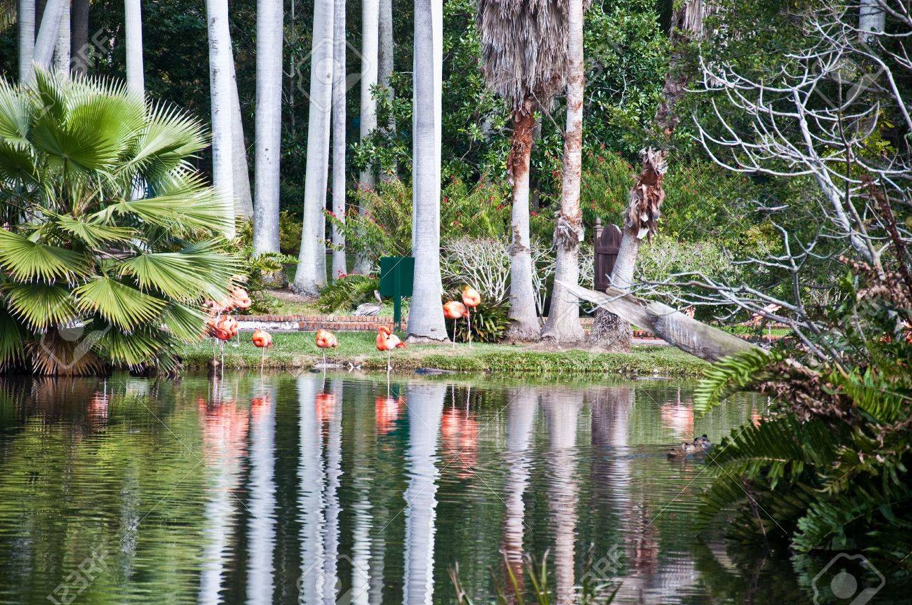 Florida tropical garden with lake, palm trees and flamingoes. Stock Photo - 6510633