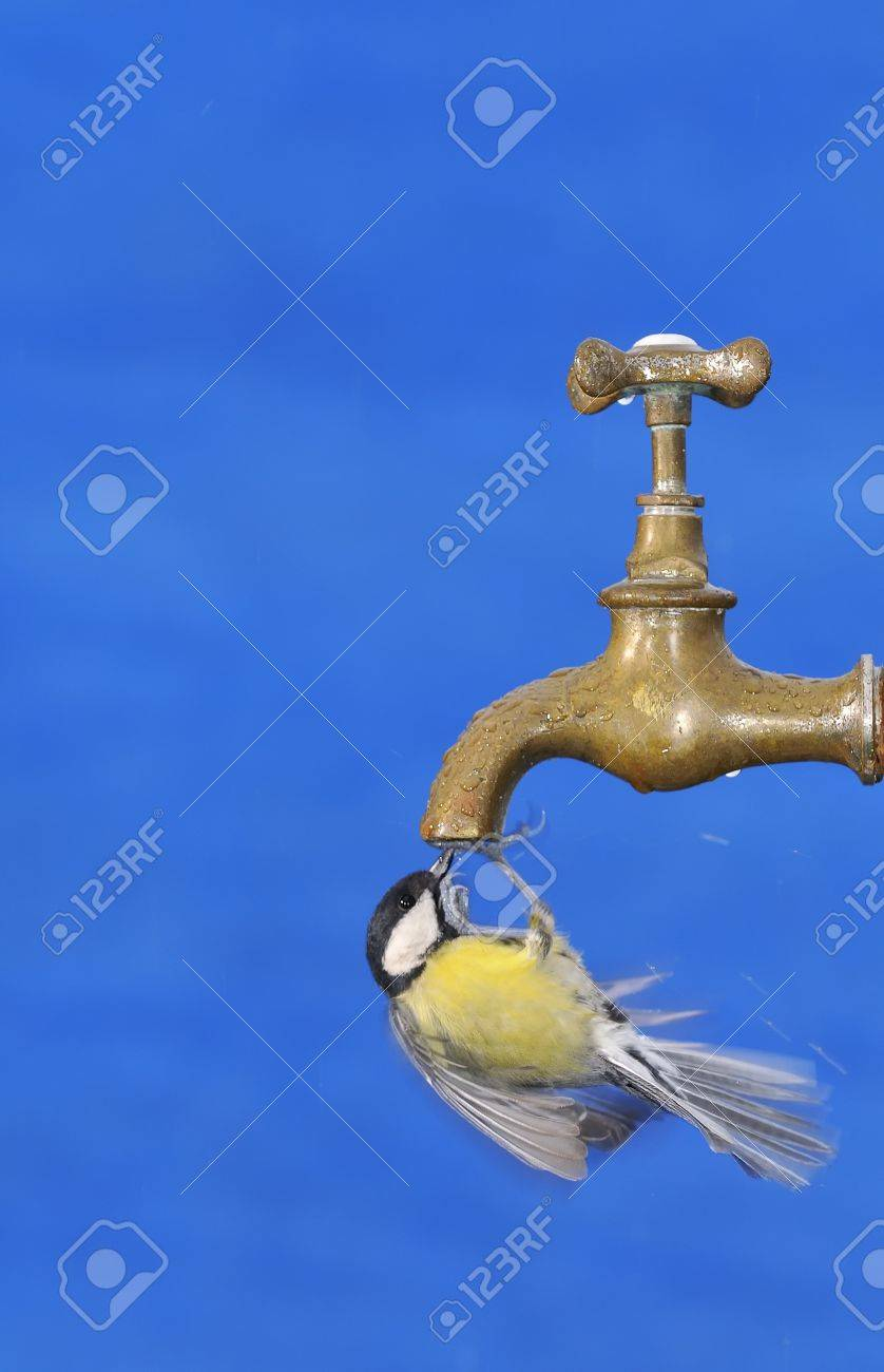 Big tit drinking from faucet against of blue bright background. - 52947568
