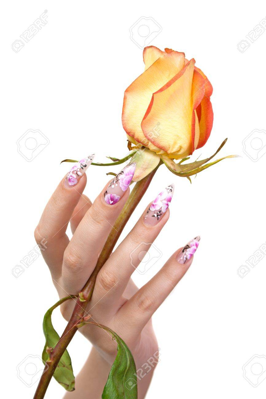 The hand of the girl with beautiful nails, holds a rose between fingers, on a white background Stock Photo - 10183530