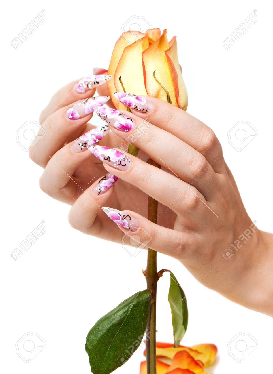 Two hands of the girl with beautiful nails hold a rose, on a white background Stock Photo - 10183532